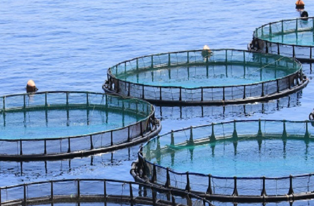 Different Increasing Trends in Worldwide Aquaculture Products Market Outlook: Ken Research