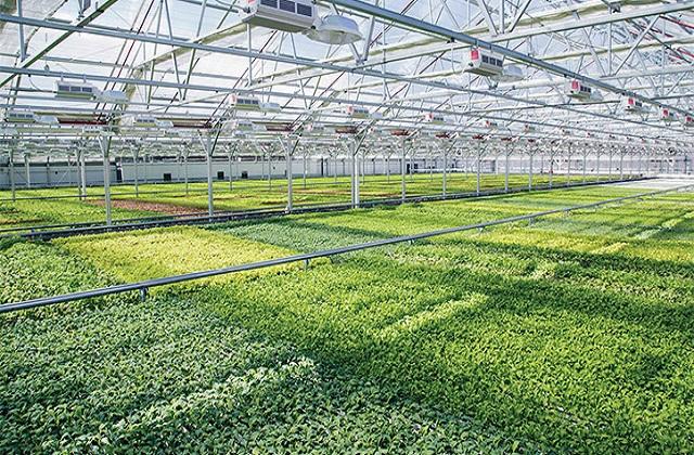 Landscape of the Worldwide Indoor Farming Technologies Market Outlook: Ken Research
