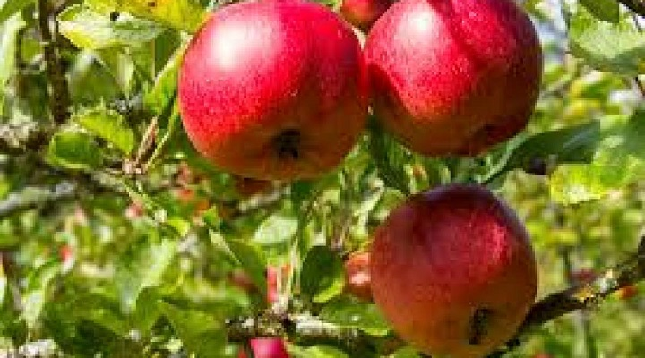 Massive Advancement in Global Fruit and Nut Farming Market Outlook: Ken Research