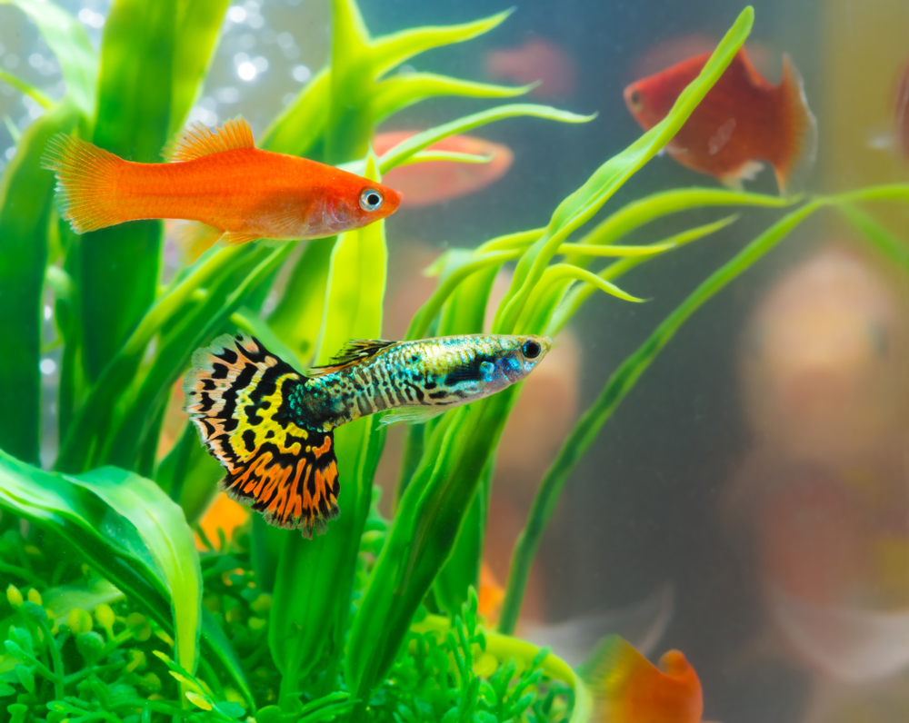 Global Freshwater Fish Market Report