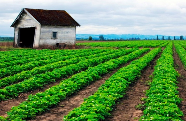 Escalating Insights across Denmark Agriculture Market Outlook: Ken Research