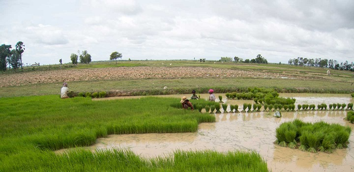 Future Growth of Ecuador Agriculture Market Outlook: Ken Research