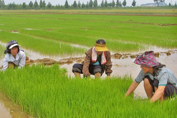 Growing Insights of South Korea Agriculture Market Outlook: Ken Research