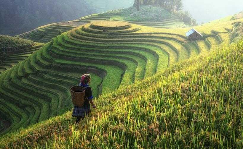 Cambodia Agriculture Market