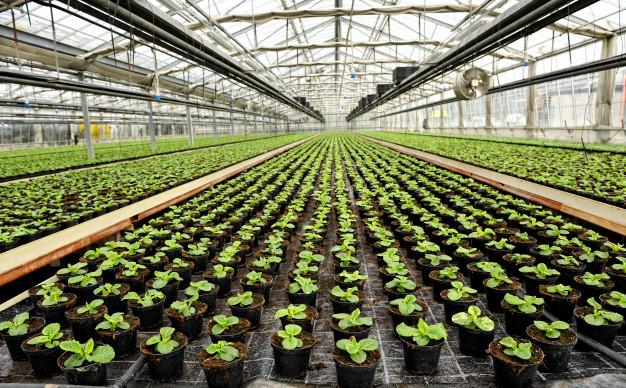 Global Commercial Greenhouse Market Outlook: Ken Research