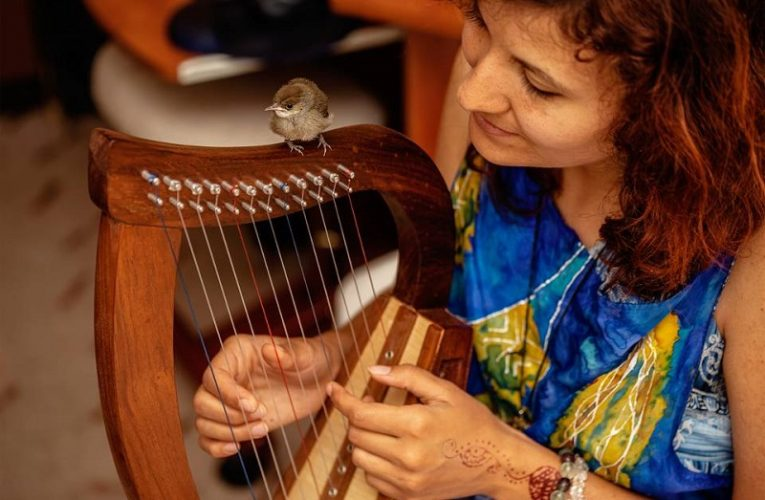Increase in Popularity of Live Musical Performances Expected to Drive Global Multi Course Harps Market: Ken Research