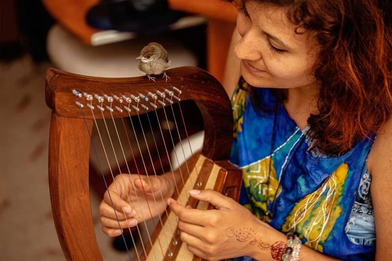Global Multi Course Harps Market