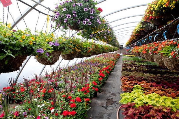 Great Innovations in the Greenhouse Nursery and Flower Global Market Outlook: Ken Research