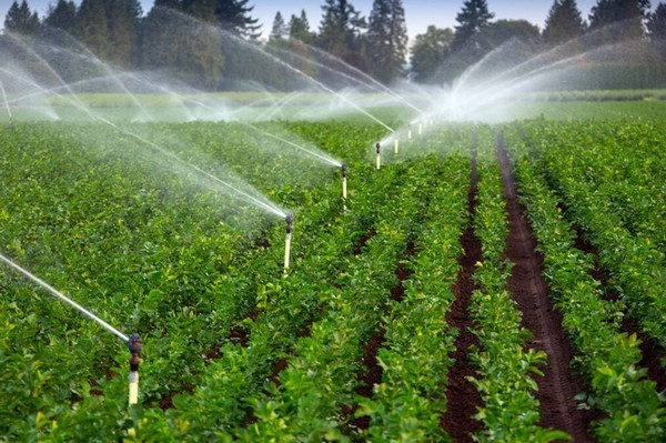 Several Initiative by Government Promote Growth of Global Irrigation Automation Industry Market Outlook: Ken Research